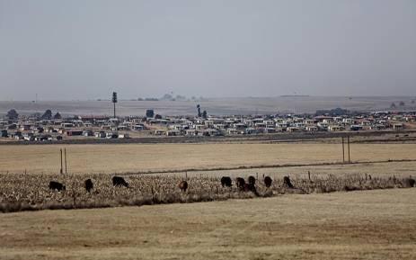 Land, Cows, shacks. Picture: Sethembiso Zulu/EWN
