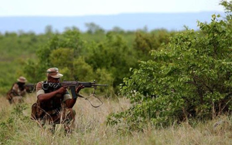 Rangers at the Kruger National Park have their hands full as the war against rhino poaching continues. This year alone, more 520 rhinos have been killed at the park for the horns. Picture: Sebabatso Mosamo/EWN.