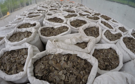 This handout photo released by Singapore's National Parks Board on 10 April 2019 and taken on 8 April 2019 shows confiscated sacks of pangolin scales in a holding area in Singapore. Picture: AFP