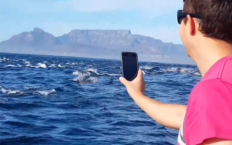 A screengrab from a YouTube video posted by Robbie Ragless showing a super pod of dolphins.