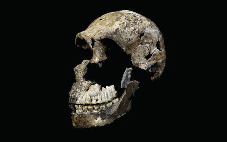 FILE: The skull of 'Neo' of Homo naledi.  Picture: Wits University/John Hawks