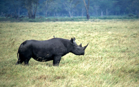A black rhino. Picture: WWF