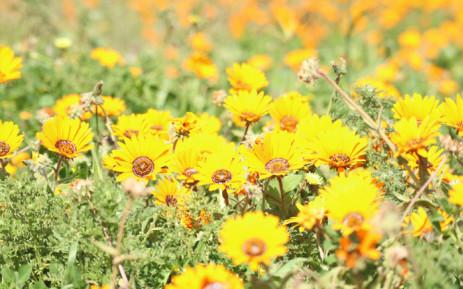 GALLERY: West Coast wildflowers put on bloomin' brilliant display, Newsline