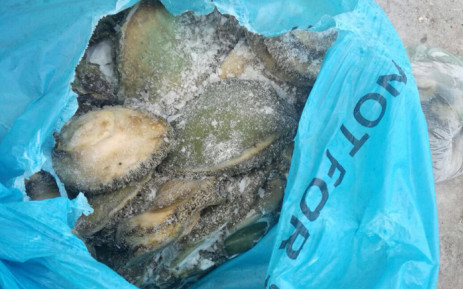 Abalone seized by police. Picture: SAPS.