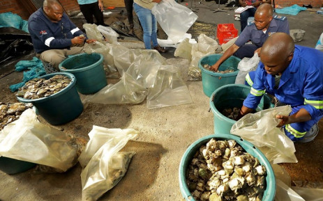 Three men were arrested following an abalone bust in Paarl East. Picture: SAPoliceService/Facebook