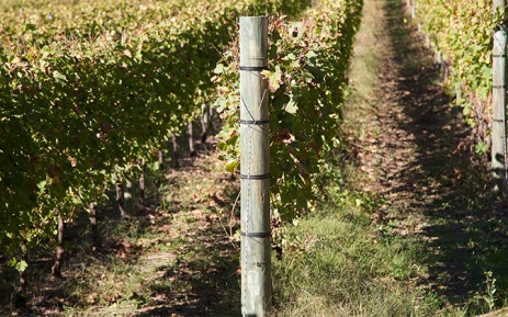 FILE: Thelema Winery says the incident happened on Saturday morning. Picture: Leah Rolando/Primedia