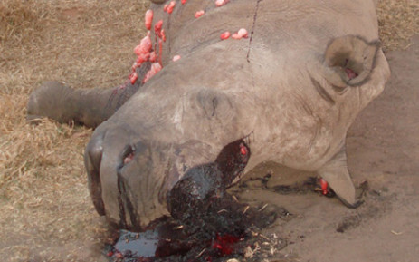 245 out of the 376 rhino poached so far this year have been found dead in KNP. Picture: NSPCA.
