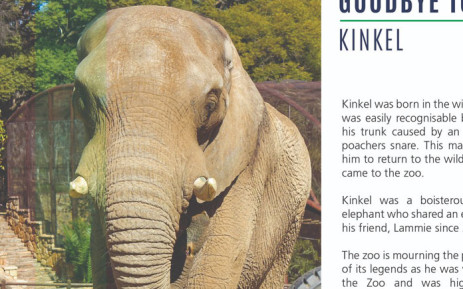 A screenrgab of the Johannesburg Zoo's tribute to Kinkel the elephant. Picture: @JoburgParksZoo/Twitter