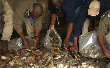 FILE: Cape Town police discover abalone during a raid. Picture: Supplied