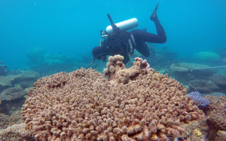 An undated handout photo shows a scientist assessing coral mortality on Zenith Reef in the Great Barrier Reef. Picture: ARC Centre of Excellence for Coral Reef Studies/AFP