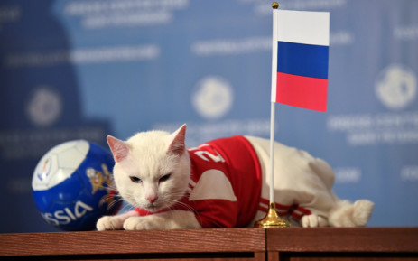 Achilles the cat, one of the State Hermitage Museum mice hunters, has predicted that Russia will win the opening match of the 2018 Fifa World Cup against Saudi Arabia. Picture: Reuters