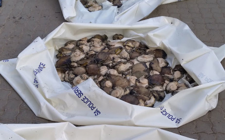 Western Cape police confiscated R700,000 worth of abalone from two suspects in Riviersonderend on 26 April 2021. Picture: @SAPoliceService/Twitter