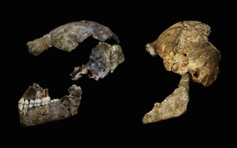 Homo Naledi. Picture: Supplied.