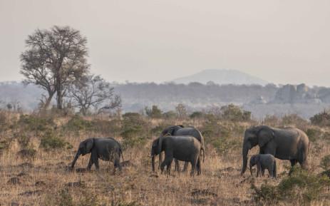 FILE: A herd of elephants. Picture: Abigail Javier/EWN