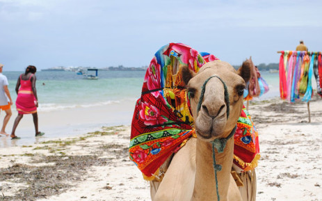 A camel pictured on a beach in Kenya. Picture: pixabay.com