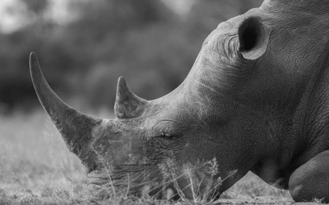 FILE: A black rhino. Picture: Pixabay.com.