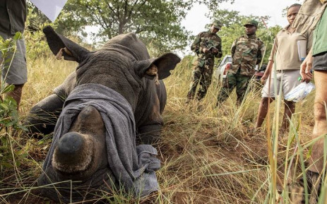 Conservationists concerned about resurgence in rhino poaching under level 1, Newsline
