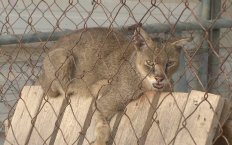 Animals suffering in the Gaza Zoo. Picture: CNN