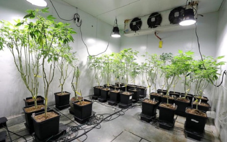 A hydroponics dagga lab was discovered in Ottery on Tuesday, 13 October 2020. Picture: @SAPoliceService/Twitter