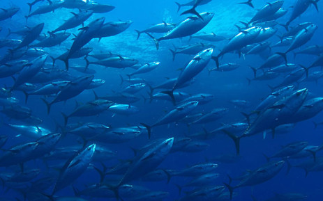 Climate change: Levels of oxygen in the ocean are falling