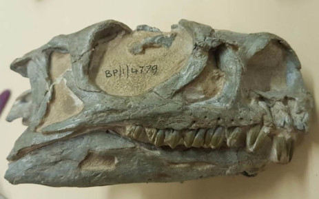 New Dinosaur Species Discovered After Hiding In Plain Sight