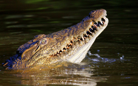 Body found after female ranger killed by croc
