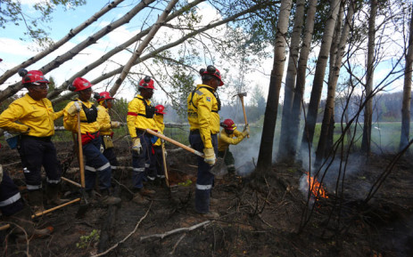 file: A group of 300 South African firefighters work to uproot a tree as they mop-up hot spots in an area close to Anzac, outside of Fort McMurray, Alberta on June 2, 2016. Picture: AFP.
