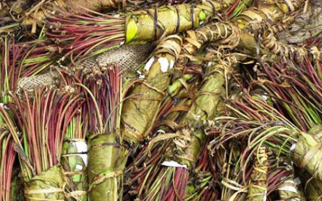Bundles of the plant used to create khat. Picture: Wikicommons