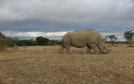 The private rhino owners association says the moratorium on trade was grossly ineffective when it comes to protecting rhino. Picture: Supplied.