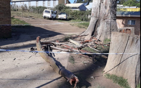 Police cordoned off the scene where a branch fell on top on three children at an Eastern Cape primary school, killing one child and injuring two others. Picture: Supplied.