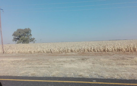 FILE: A recent report by agricultural industry association, AgriSA, has found more than 15,000 farms in the province have been affected. Picture: EWN.