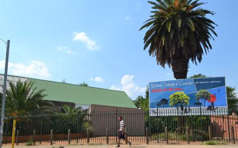 Pretoria Zoo snake believed to be stolen