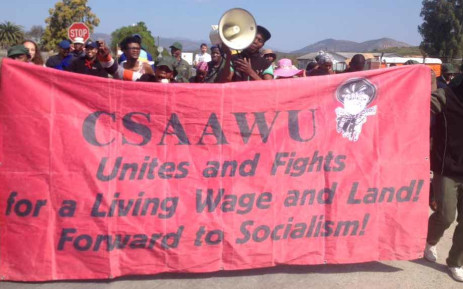 Striking members of the Commercial Stevedoring Agricultural and Allied Workers Union. Picture: Facebook.com.