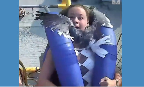 Girl hit by seagull