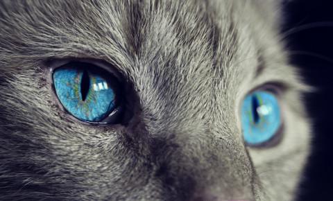 cat eyes pixabay