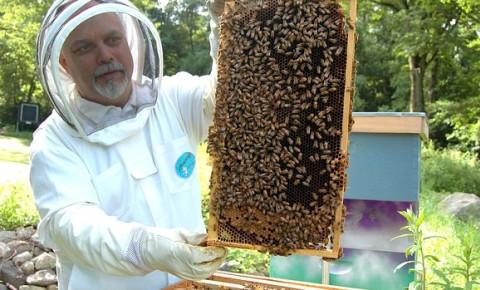 beekeeper-bee-hivejpg