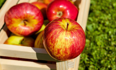 apple-fruitjpg