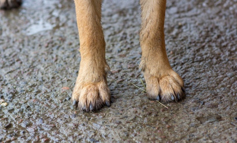 dog paws animal puppy pet 123rf