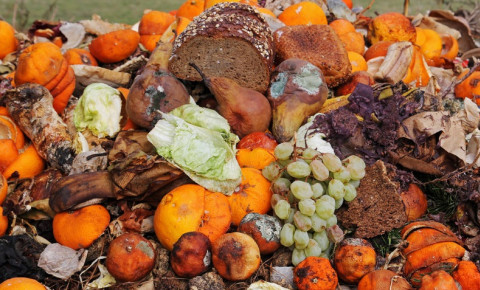 food-waste-discarded-bread-and-fruitjpg