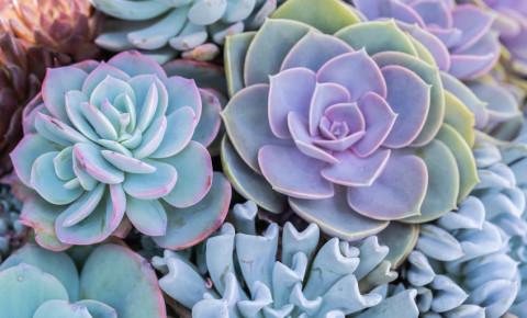Succulents or cactus plants 123rf