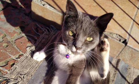 210728-ash-the-cat-edjpg