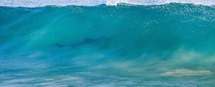 J bay surfer shark attack