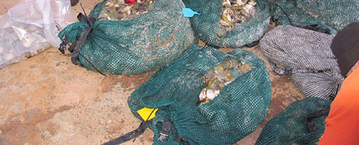 Eight men were arrested for abalone poaching in Robben Island on 24 August 2012.  Picture: SAPS