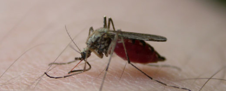 FILE: A mosquito. Picture: sxc.hu.