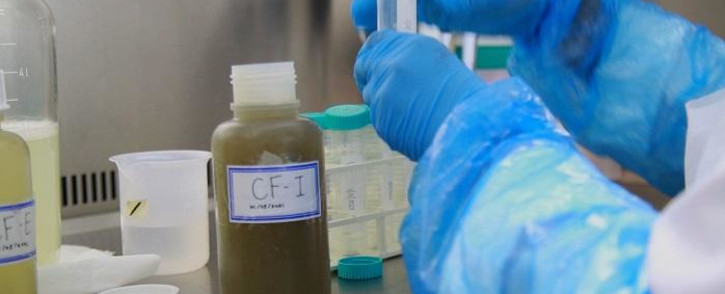 A team at the South African Medical Research Council (SAMRC) shows us how the long process of testing sewage samples begins. They aren't looking for a live coronavirus, but are searching for RNA, a nucleic acid similar to DNA. Picture: Zukile Daniel/Eyewitness News.