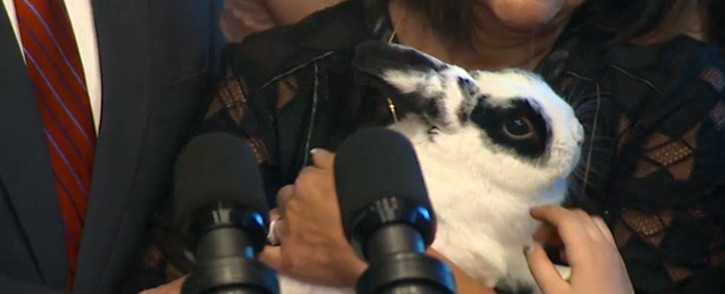 A screengrab of the Pence family's pet rabbit, Marlon Bundo.