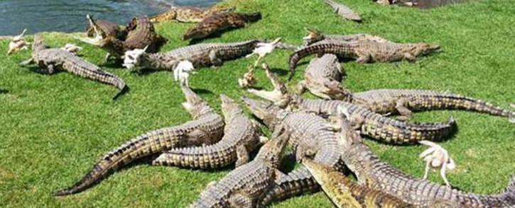 Picture: Croc City official website.
