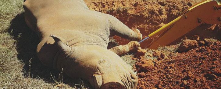 A rhino being buried after he died from injuries sustained during a poaching attack. Picture: Sibuya Rhino Foundation.