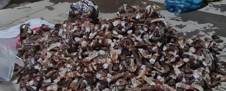 In April 2021 the Moorreesburg SAPS Crime Prevention Unit arrested two suspects for being in possession of crayfish tails worth R450,9000. Picture: @SAPoliceService/Twitter