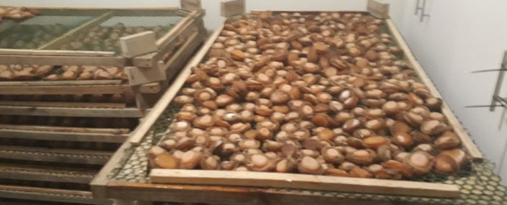 FILE: Abalone. Picture: SAPoliceService/Facebook